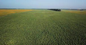 Migrar sobre o campo com girassóis em um dia quente vídeos de arquivo