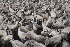 Migrate of birds stock photo