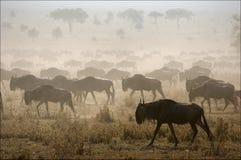 Migratie. royalty-vrije stock foto