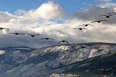 Migratie Stock Foto