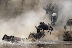 Migratie van het meest wildebeest stock afbeelding
