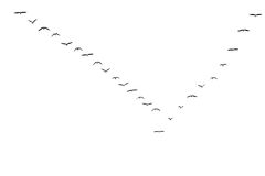Migrating birds Royalty Free Stock Photos