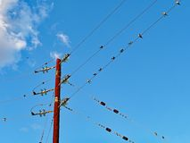 Migrating Swallows Resting on Power Lines, Greece. Swallows resting on power lines at beginning of Southern migration at end of European summer, Greece stock photography