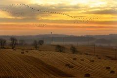 Migration Stock Photo