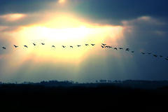Migration Royalty Free Stock Image