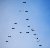 Migration of birds south Stock Images