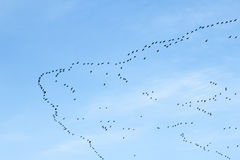 Migration of birds Stock Photos