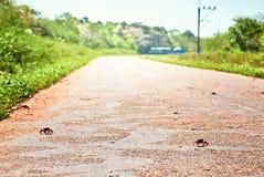 Migration crabs coast  Caribbean Sea Cuba South America Stock Photo