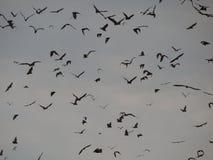 Migration de batte Photo libre de droits