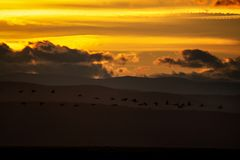 Migration de grue au coucher du soleil photographie stock