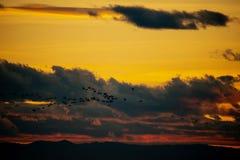 Migration de grue au coucher du soleil photos libres de droits