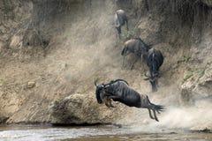 Migration of wildebeest Stock Photo