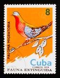 Migratorius del Ectopistes de la paloma de pasajero, serie extinto de los pájaros, circa 1974 imágenes de archivo libres de regalías