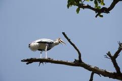 Migratory Bird - 2 Stock Images