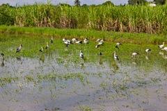 Migratory birds Royalty Free Stock Photo