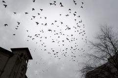 Migratory birds in the city. Migratory birds in the sky royalty free stock image