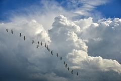 Migratory birds. On the flight to the south royalty free stock image