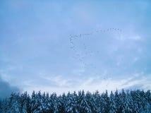 Migratory birds Royalty Free Stock Photography