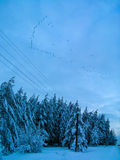 Migratory birds. Fly to warmer climates over the trees in the snow Stock Photos