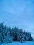 Migratory birds Stock Photos
