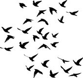 Migratory birds flying drawn in  Stock Photos