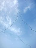 Migratory Birds Flying in Formation. Some migratory birds are flying in a V-formation Royalty Free Stock Photo