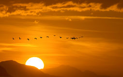 Migratory Birds Flying Over the Mountain. Birds flying against sunset sky background environment or ecology concept royalty free stock image