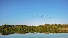 Migratory birds. Royalty Free Stock Image