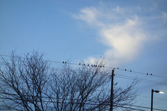Migratory birds resting on a wire Royalty Free Stock Image