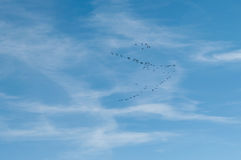 Migratory birds in the sky Stock Photography