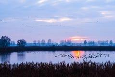 Migratory birds at sunset Royalty Free Stock Photo
