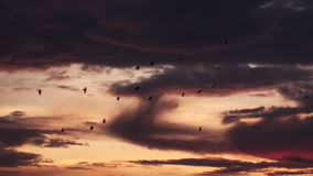 Migratory Birds In The Sunset Sky stock footage