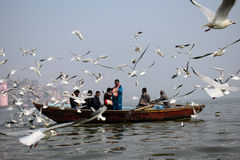 Migratory Birds in Varanasi, India Stock Photography