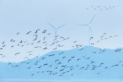 Migratory birds and wind farm background Royalty Free Stock Images