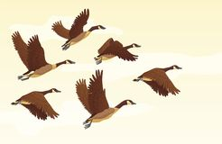 Free Migratory Geese Background Royalty Free Stock Photo - 115739115