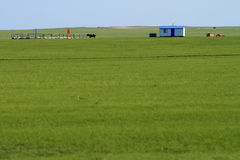 Migratory pasture grasslands. The temporary residence of nomadic seasonal migration Stock Photo