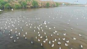 Migrazione dei gabbiani alle attrazioni turistiche in Tailandia stock footage
