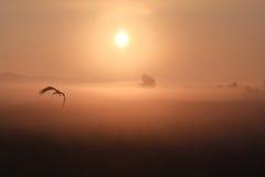 Migrazione della cicogna Fotografia Stock Libera da Diritti