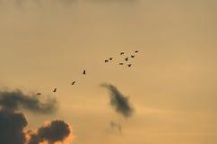 Migrazione di uccello Immagine Stock Libera da Diritti