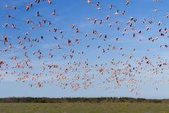 Migrazione di volo fotografie stock libere da diritti