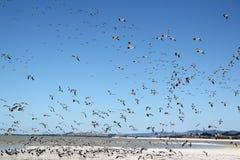 Migrerende vogel royalty-vrije stock foto's