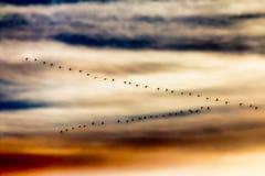 Migrerende vogels Royalty-vrije Stock Afbeelding