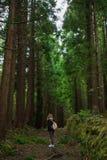 Δάσος στο Σάο Miguel, Αζόρες, Πορτογαλία Ψηλά δέντρα στοκ εικόνα με δικαίωμα ελεύθερης χρήσης