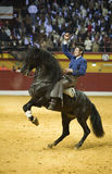 Miguel Angel Martin, bullfighter on horseback spanish Royalty Free Stock Photos