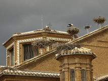 miguel san storks Royaltyfria Foton