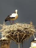 miguel san storks Royaltyfri Foto