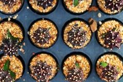 mihanovichii scuro del Gymnocalycium L'hobby che fa il giardinaggio con molti del cactus del germoglio nel giardino della scuola  Fotografia Stock