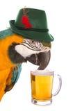 Mijado como um papagaio foto de stock royalty free