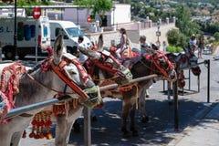 MIJAS ANDALUCIA/SPAIN - JULI 3: Åsnataxi i Mijas Andalucia Royaltyfri Foto