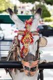 Mijas Donkey Royalty Free Stock Image